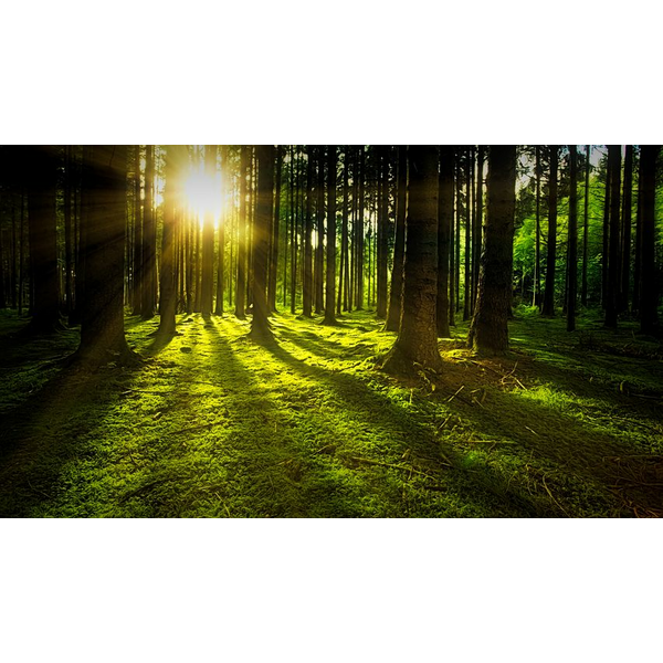 forest in day pixabay.com